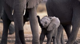 4K Little Elephants Photo Free