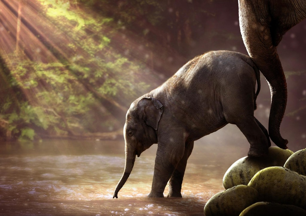 4K Little Elephants wallpapers HD