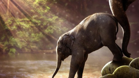 4K Little Elephants wallpapers high quality