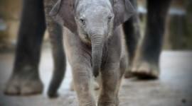 4K Little Elephants Wallpaper For IPhone