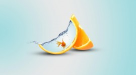 4K Orange Slices Wallpaper Free