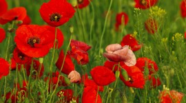 4K Red Fields Photo Download
