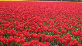 4K Red Fields Photo Download#1