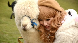Alpaca Wallpaper Download
