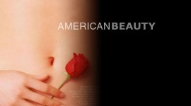 American Beauty Wallpaper Gallery