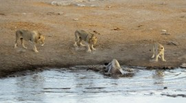 Animal Watering Hole Photo Free