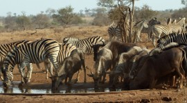 Animal Watering Hole Photo#1