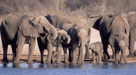 Animal Watering Hole Wallpaper