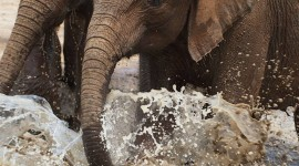 Animal Watering Hole Wallpaper For IPhone