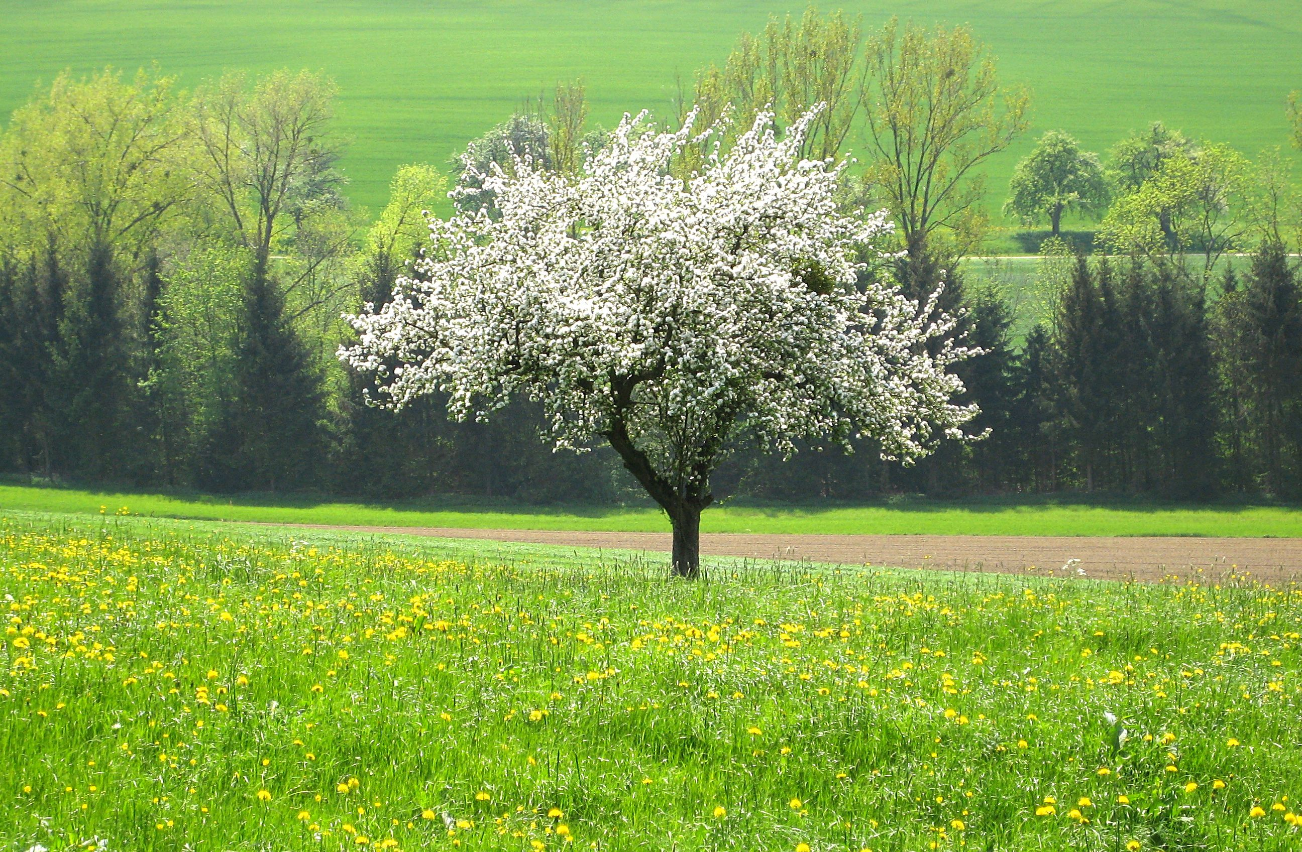 Apple Trees Photos Hd Bestchristmasdeals Org