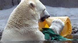 Bear Swim Photo
