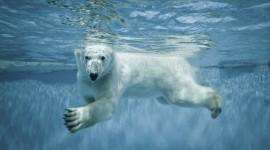 Bear Swim Photo#1