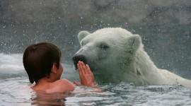 Bear Swim Wallpaper 1080p