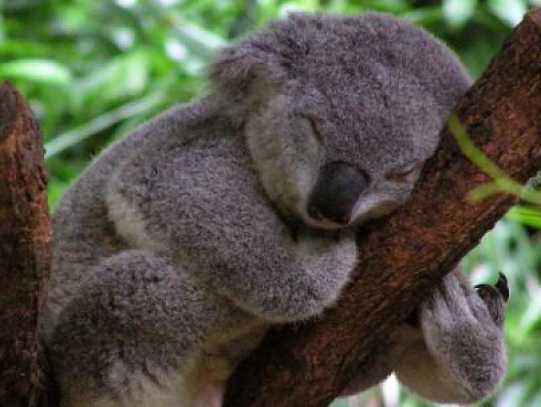 bears sleep wallpapers high quality download free