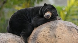 Bears Sleep Wallpaper