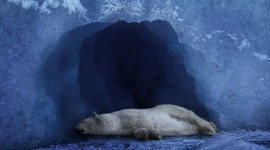 Bears Sleep Wallpaper For PC