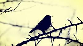Birds On Branch Desktop Wallpaper