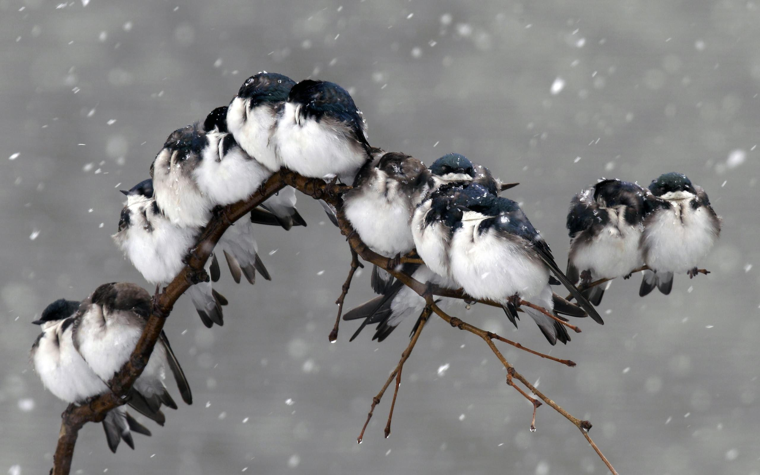birds on branch wallpapers high quality | download free