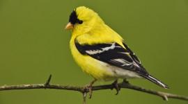 Birds On Branch Photo