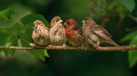 Birds On Branch Wallpaper