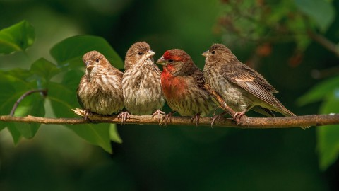 Birds On Branch wallpapers high quality