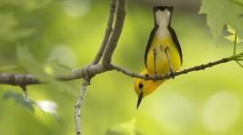 Birds On Branch Wallpaper Download