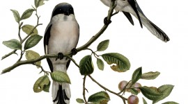 Birds On Branch Wallpaper For IPhone