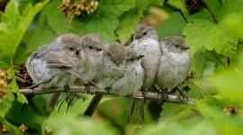Birds On Branch Wallpaper Full HD