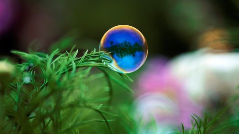 Bubbles Grass wallpapers high quality