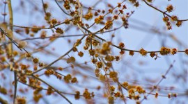 Buds In The Trees Wallpaper Download Free