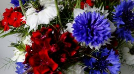 Cornflowers Wallpaper For IPhone