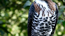 Crowned Eagle Wallpaper For IPhone 6 Download
