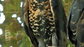 Crowned Eagle Wallpaper For IPhone Free