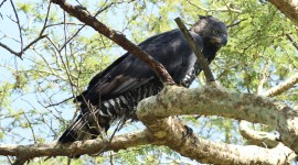 Crowned Eagle Wallpaper Gallery