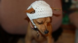 Dog Fashion Photo Download