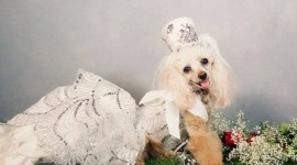 Dog Fashion Wallpaper Download