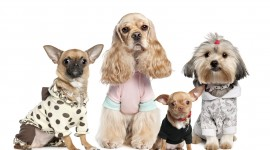 Dog Fashion Wallpaper For Desktop