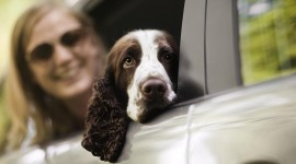 Dog In The Car Photo Download