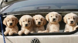 Dog In The Car Wallpaper For PC
