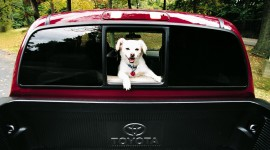 Dog In The Car Wallpaper Full HD