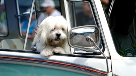 Dog In The Car Wallpaper Gallery