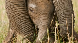 Elephants Sleep Wallpaper For IPhone