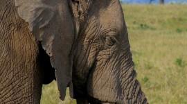 Elephants Sleep Wallpaper For Mobile