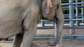 Elephants Sleep Wallpaper Galler