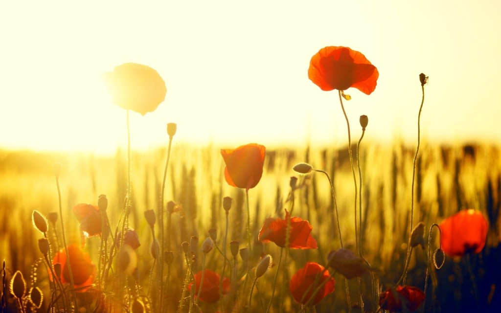 Flowers And Sunshine wallpapers HD