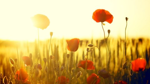 Flowers And Sunshine wallpapers high quality