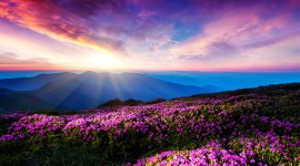 Flowers And Sunshine Desktop Wallpaper