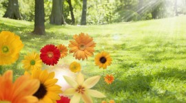 Flowers And Sunshine Photo Free#1