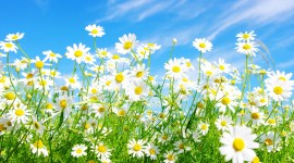 Flowers And Sunshine Wallpaper 1080p
