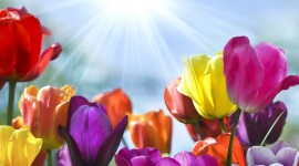 Flowers And Sunshine Wallpaper Download